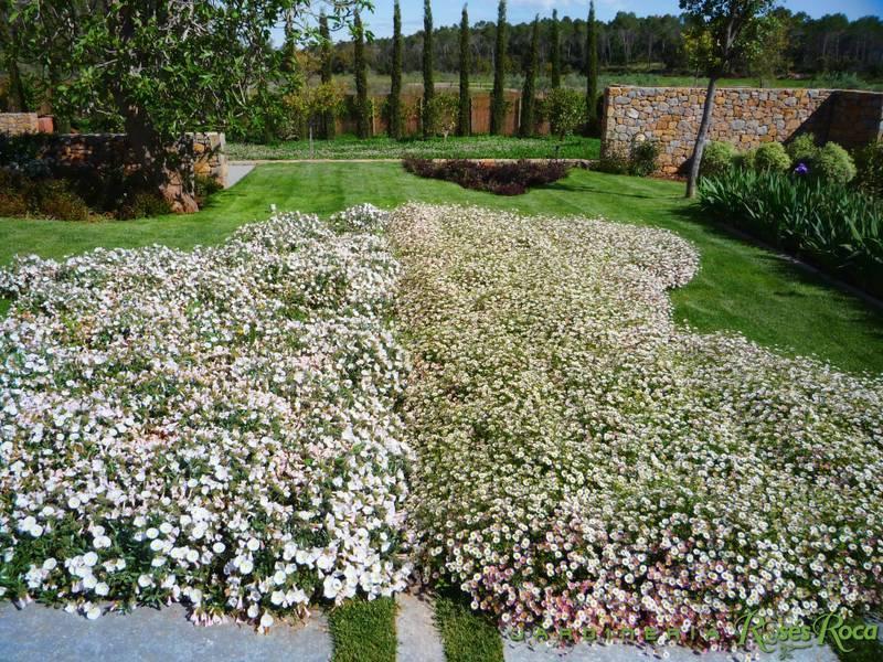 JardineriaRosesRoca10