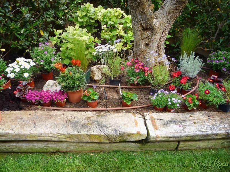 JardineriaRosesRoca27