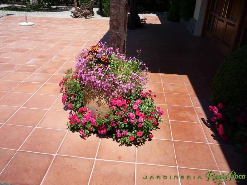 JardineriaRosesRoca37