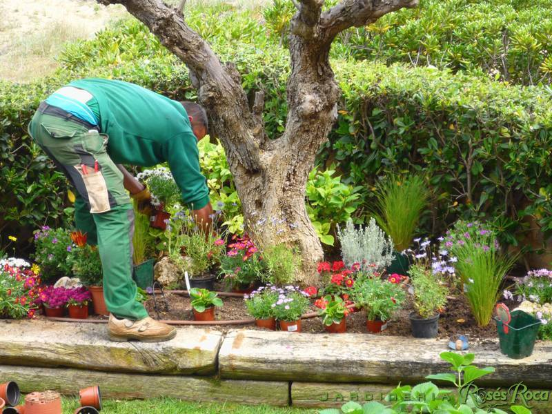 JardineriaRosesRoca40