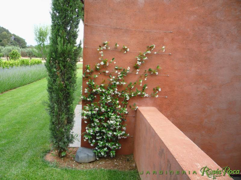 JardineriaRosesRoca44