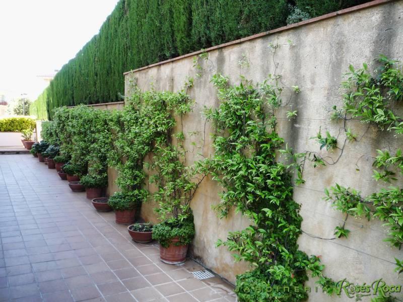 JardineriaRosesRoca46