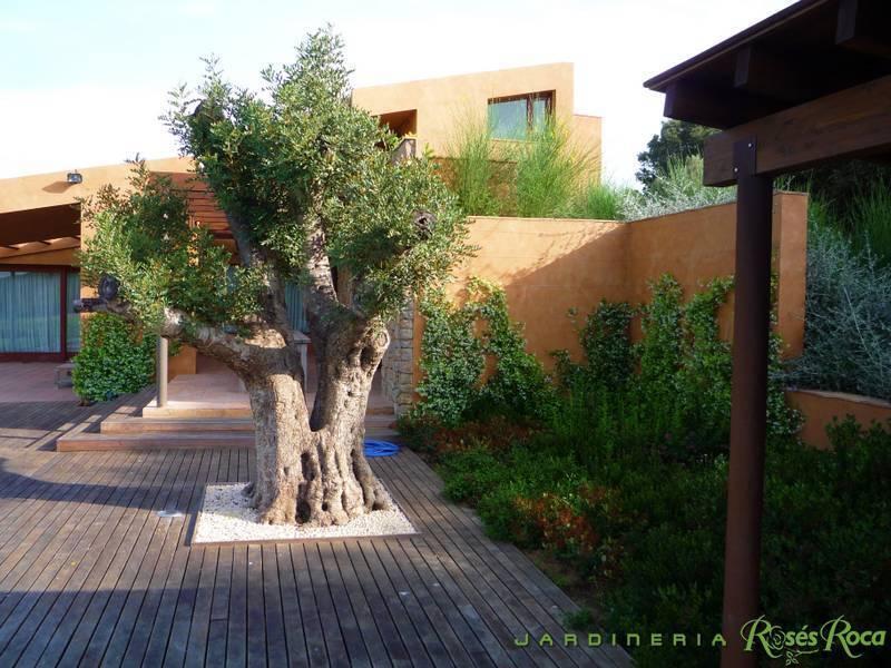 JardineriaRosesRoca50
