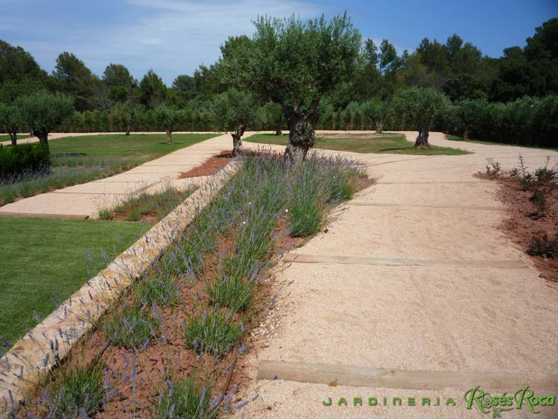 JardineriaRosesRoca60