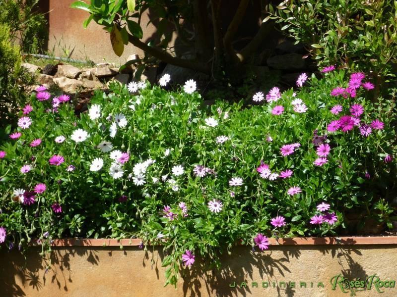 JardineriaRosesRoca66