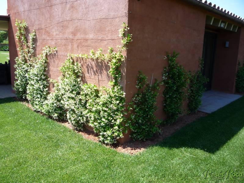 JardineriaRosesRoca72