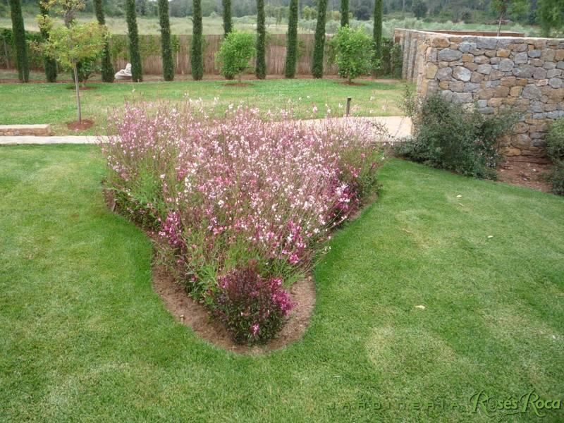 JardineriaRosesRoca85