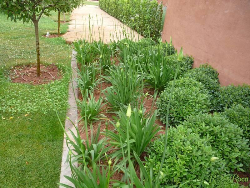 JardineriaRosesRoca92