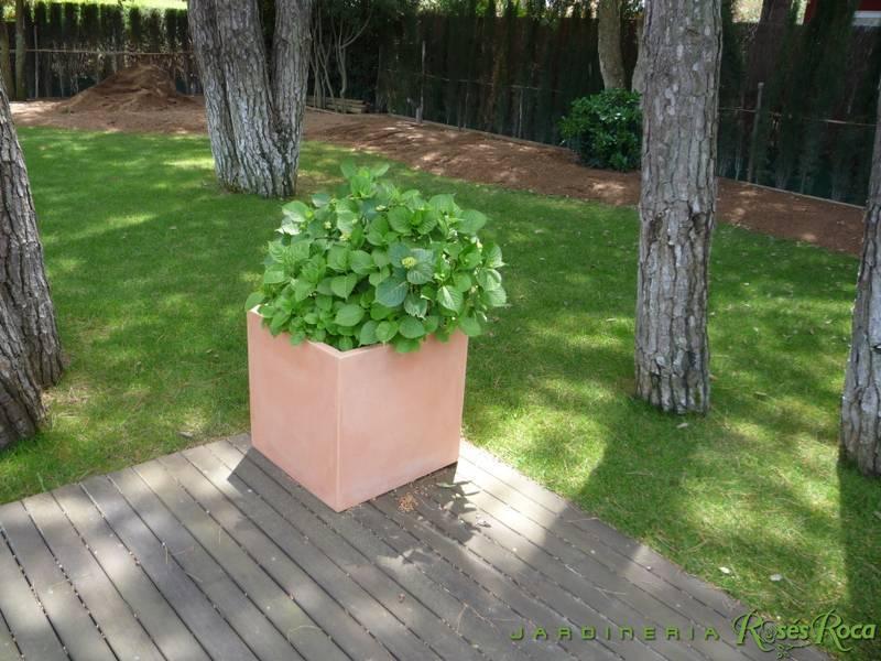 JardineriaRosesRoca43