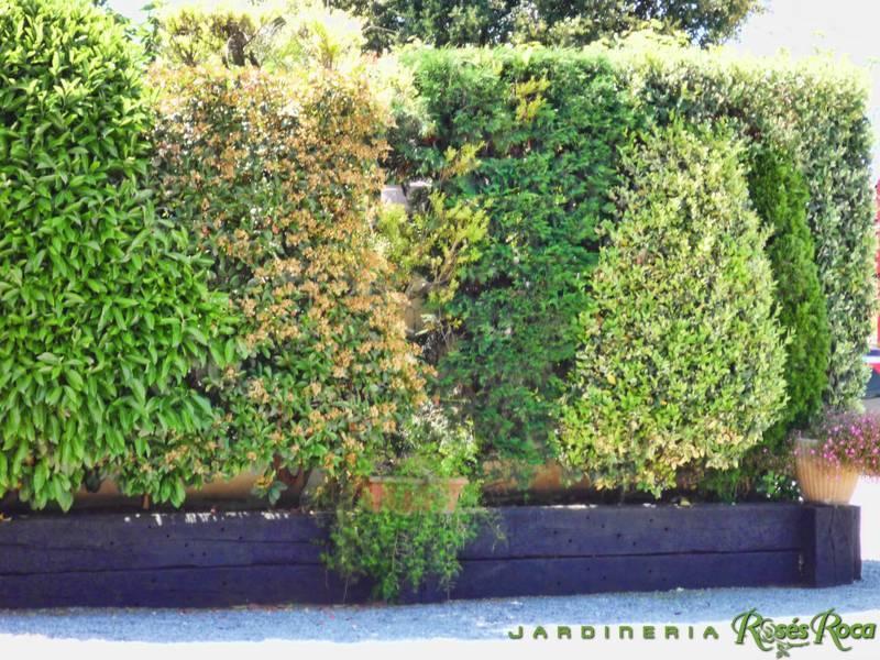 JardineriaRosesRoca13