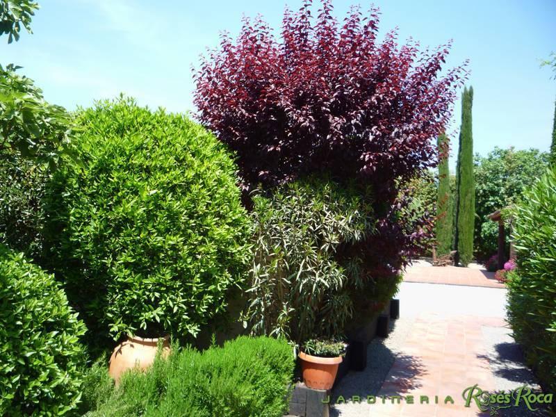 JardineriaRosesRoca32