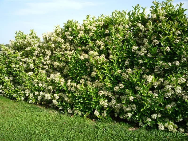 JardineriaRosesRoca48