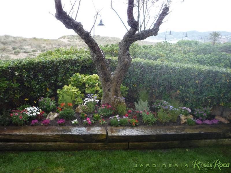 JardineriaRosesRoca36
