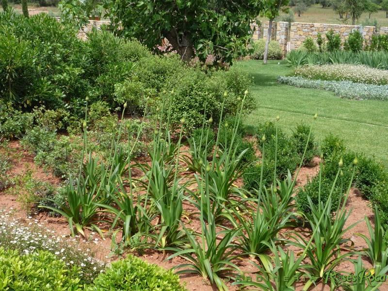 JardineriaRosesRoca53