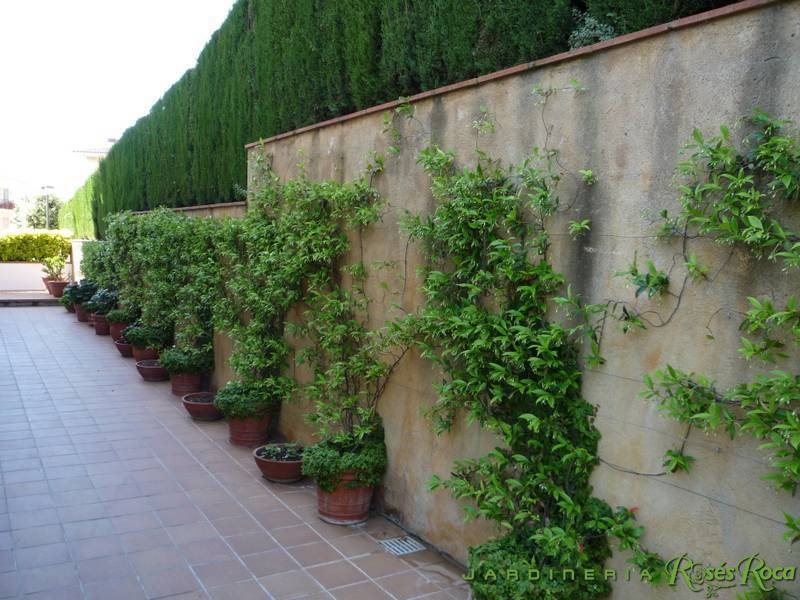 JardineriaRosesRoca70