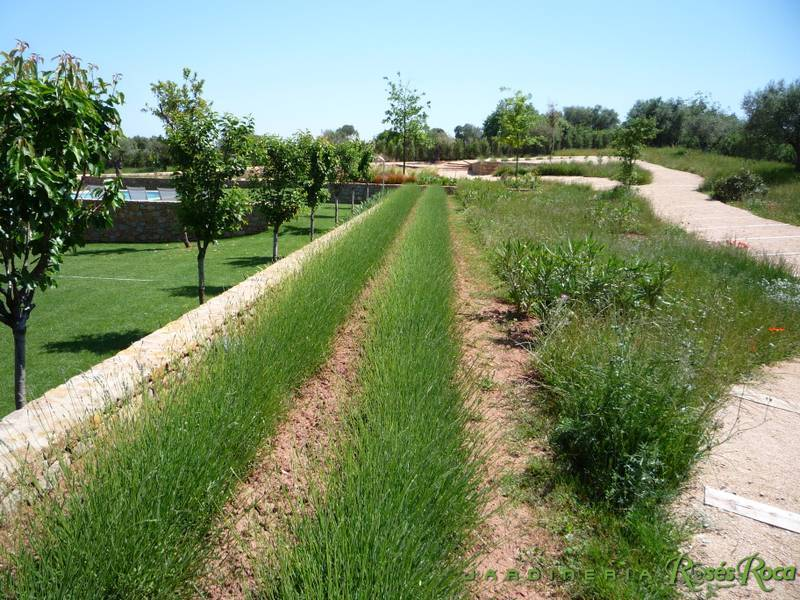 JardineriaRosesRoca73